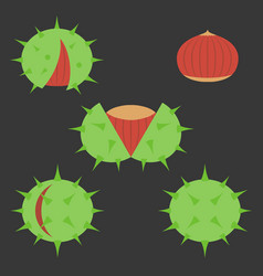 Chestnut icon vector