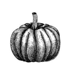 Hand sketched pumpkin thanksgiving day design vector