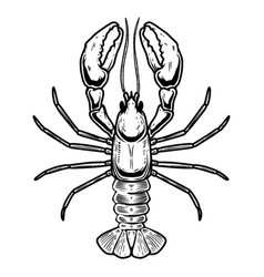 lobster in engraving style isolated on white vector image