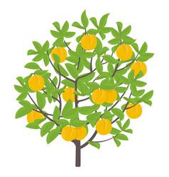 Peach tree fruit tree vector