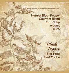 Vintage banner with black pepper plant vector