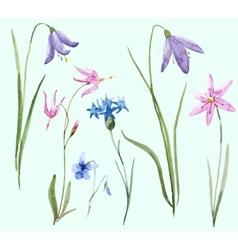 Watercolor wild flowers vector image