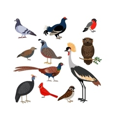 bird isolated icons vector image