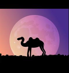 night camel in the desert vector image