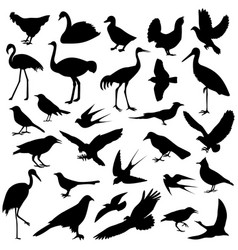 birds of different vector image vector image