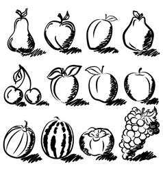 Temperate Fruits sketch drawing vector image
