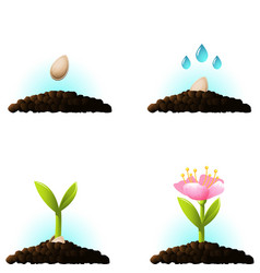 seed sprout icons vector image vector image