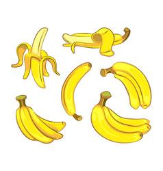 Bananas in cartoon style vector