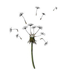 dandelion blowing silhouette flying blow vector image
