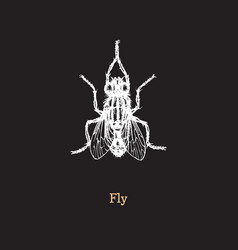 fly on black background hand vector image