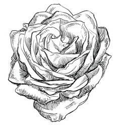 hand drawing flower 4 vector image