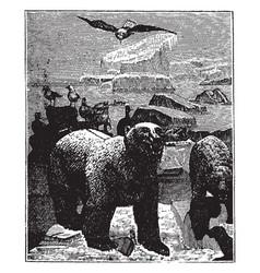 Polar bears on iceberg vintage vector