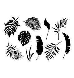set exotic leaves palm leaves silhouette vector image