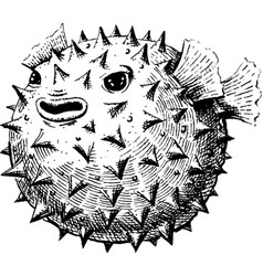Blowfish vector