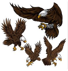 eagle wing fly hawk vector image
