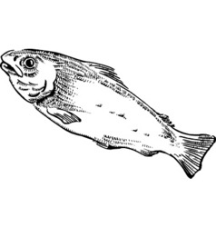 Fish illustration vector