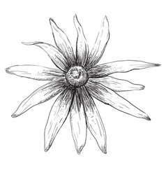 hand drawing flower 5 vector image