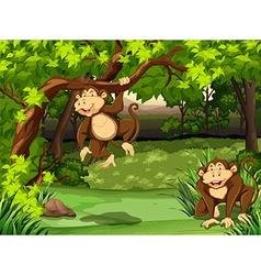 Monkeys vector
