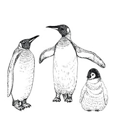 Penguin sketch hand drawn vector