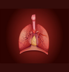 diagram showing lungs with disease vector image