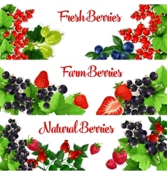 Fresh berries banners set vector