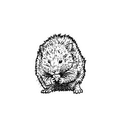 hand drawn hamster black white sketch vector image