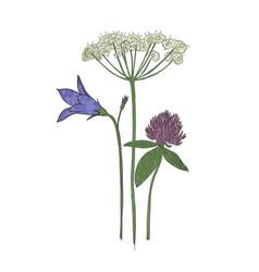 Hand drawn wild flowers in midsummer vector