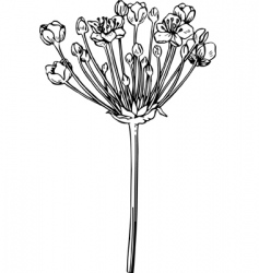 plant butomus vector image