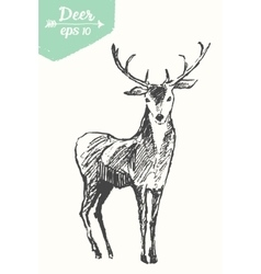 Sketch deer vintage hand drawn vector image