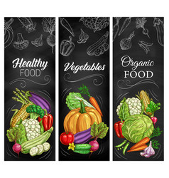 Vegetable sketches on chalkboard farm food vector
