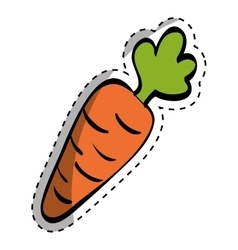 Fresh carrot vegetable vector