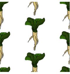 horseradish natural coloured pattern vector image
