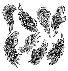 wings set bird black amp white vector image