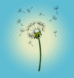 dandelion flower fluff the wind vector image