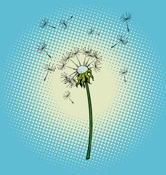 dandelion flower fluff wind vector image