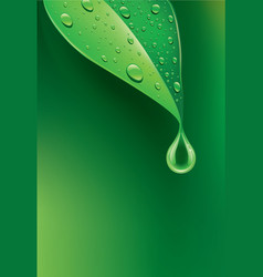 Fresh green leaf with many water droplets vector