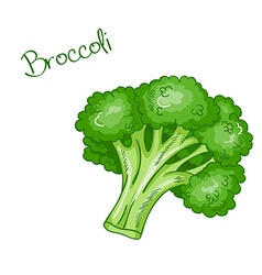 isolated cartoon fresh hand drawn broccoli vector image