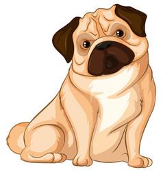 Little pug dog on white background vector