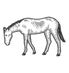 Thin and exhausted horse sketch scratch board vector