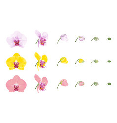 Variety colors of moth orchid vector
