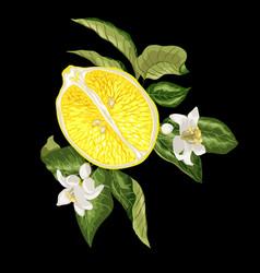 Banner image with juicy half of citru orange vector