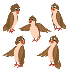Brown Birds Set vector image