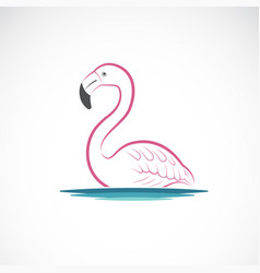 flamingo design on white background wild animals vector image