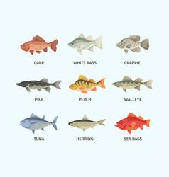 River and sea fish set huge sea bass fast vector