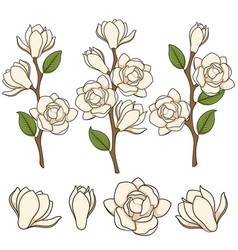 Flowering white magnolia branches vector