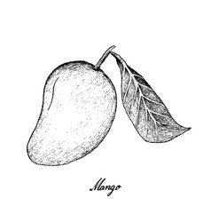 hand drawn of mango fruits on white background vector image vector image