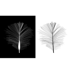 Black and White Bird Feather Drawn in vector image