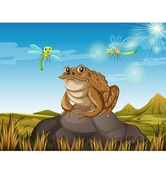 Brown toad sitting on rock vector