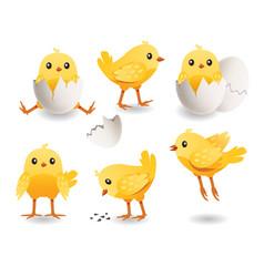 cute chicks set little yellow bird vector image