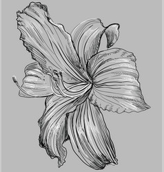 Grey flower 1 vector
